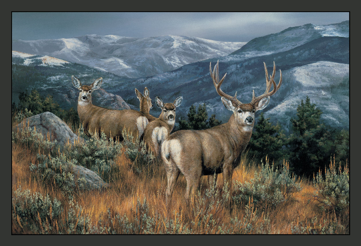 Wildlife Rug Collection Printed